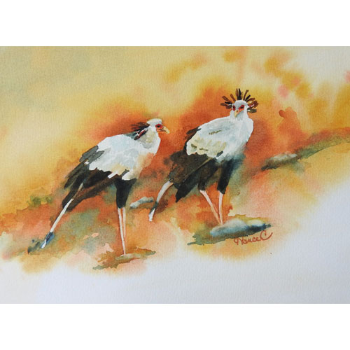 Two African Secretary birds on an upsloping landscape in black, white and orange.