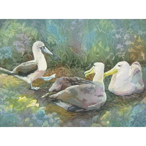 : Painting of a blue-footed booby approaching a pair of nesting albatross with dreamy background.