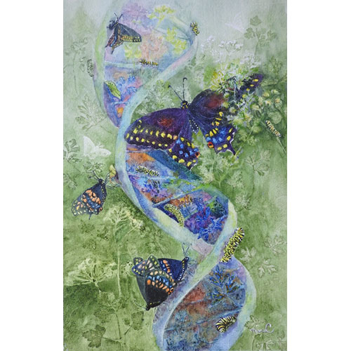 Painting of a double helix with every stage of a Black Swallowtail's life cycle shown on it.